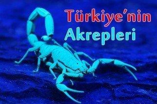 Türkiye'nin Akrepleri